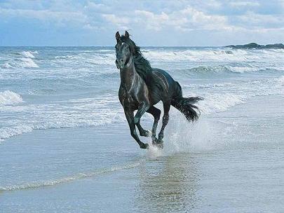 A imagem mostra um cavalo selvagem negro em galope pela praia do mar